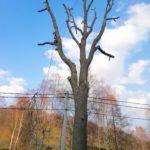 rizikové kácení a prořezávání stromů